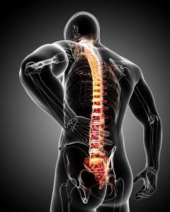 colonna_vertebrale_gimas_studio_fisioterapia_roma-1